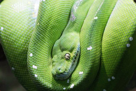 портрет людей под знаком змеи